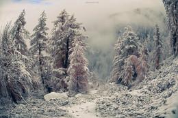 Die Chroniken von Narnia Alpine. / ***