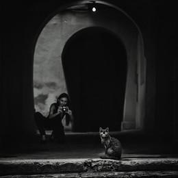 Cats / ***
